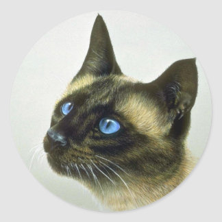Siamese (head study) classic round sticker