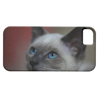 Siamese kitten iPhone 5 cover
