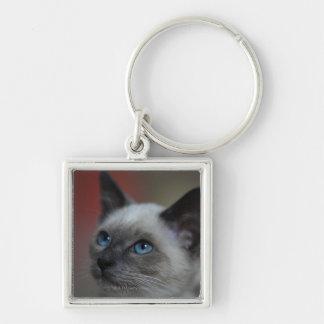 Siamese kitten key ring