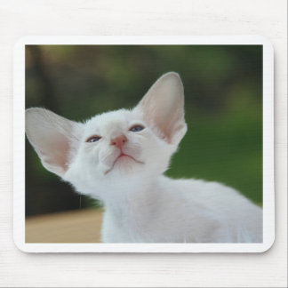 Siamese kitten mouse mat