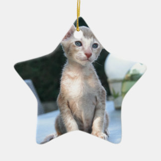 Siamese Kitten on a table Christmas Ornament
