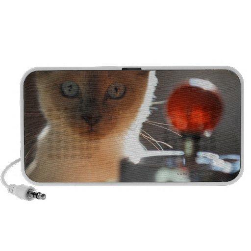 Siamese kitten notebook speakers
