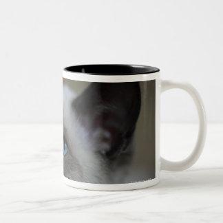 Siamese kitten Two-Tone coffee mug
