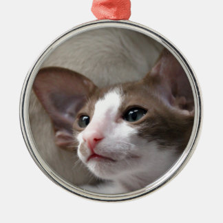 Siamese Kitten with big ears Christmas Ornament