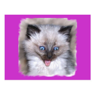 Siamese Kitten With Tongue Out Postcards