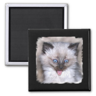 Siamese Kitten With Tongue Out Square Magnet