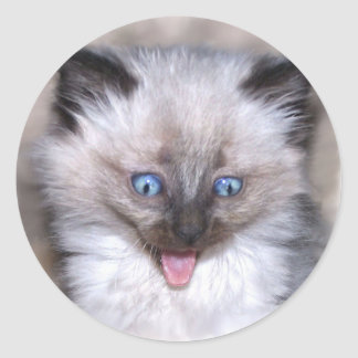 Siamese Kitten With Tongue Out Classic Round Sticker
