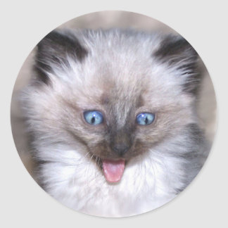 Siamese Kitten With Tongue Out Round Sticker