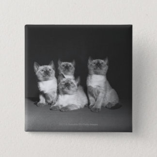 Siamese kittens looking up B&W 15 Cm Square Badge