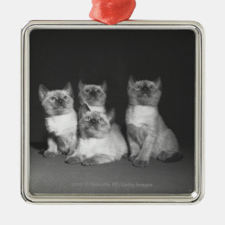 Siamese kittens looking up B&W Christmas Ornament