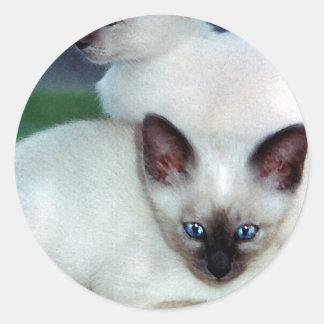 Siamese Kittens Sticker