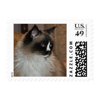 Siamese Kitty Postage Stamps