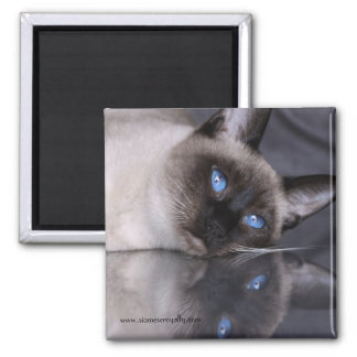 Siamese Royalty 2 Inch Square Magnet