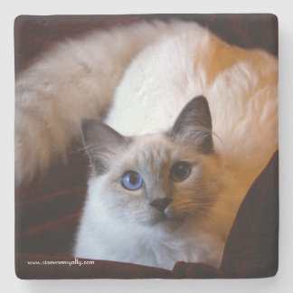 Siamese Royalty Limestone Coaster