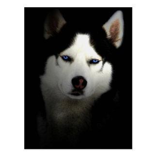 Siberia Husky Postcard