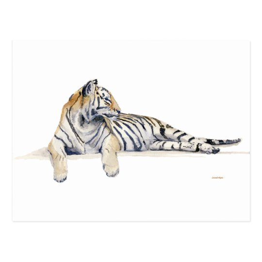 Siberian/ / Bengal Tiger Postcard