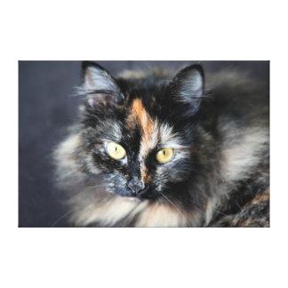 Siberian Cat Canvas Print