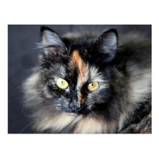 Siberian Cat Postcard