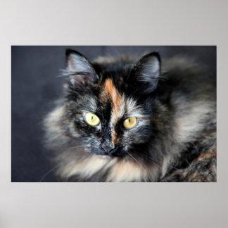 Siberian Cat Poster
