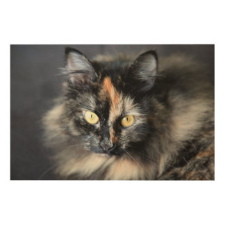 Siberian Cat Wood Canvases