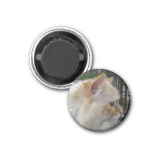 Siberian Forest Cat 3 Cm Round Magnet