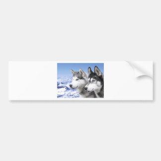Siberian Huskies Bumper Sticker