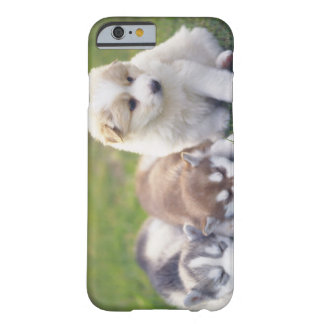 Siberian Husky; A working dog breed that Barely There iPhone 6 Case