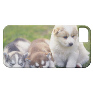 Siberian Husky; A working dog breed that Case For The iPhone 5