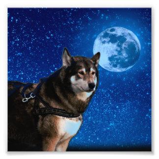 Siberian husky and the Blue Moon Photo Print