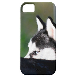 Siberian husky iPhone 5 cases
