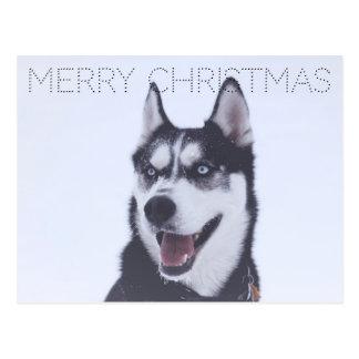 Siberian Husky-Christmas Postcard
