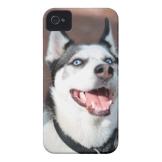 Siberian Husky dog blue eyes Case-Mate iPhone 4 Cases