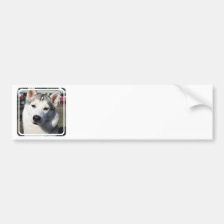 Siberian Husky Dog  Bumper Sticker