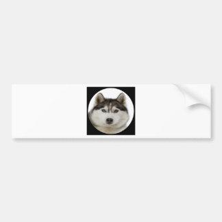 """Siberian Husky dog"" Bumper Stickers"