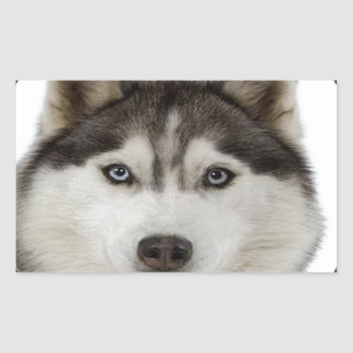 """Siberian Husky dog"" Rectangular Sticker"