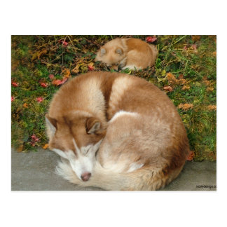 Siberian Husky & German Klein Spitz Pomeranian Postcard