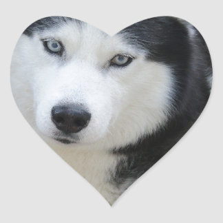 Siberian Husky Heart Sticker