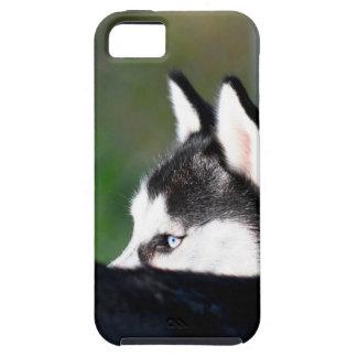 Siberian husky iPhone 5 case