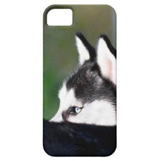 Siberian husky iPhone 5 covers