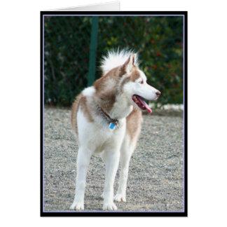 Siberian Husky Notecard Greeting Card