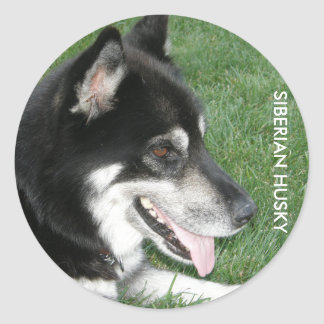 Siberian Husky Photo Classic Round Sticker