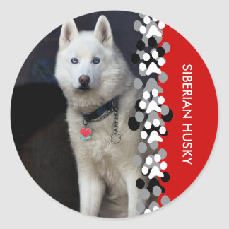 Siberian Husky Photo Classic Round Sticker