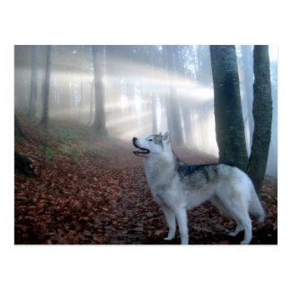 Siberian Husky - postcard
