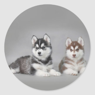 Siberian husky puppies classic round sticker