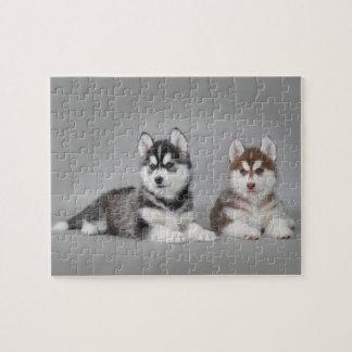 Siberian husky puppies jigsaw puzzle
