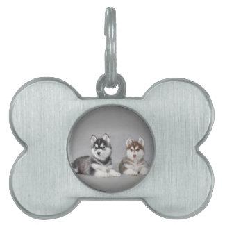 Siberian husky puppies pet name tag