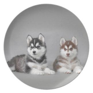 Siberian husky puppies plate