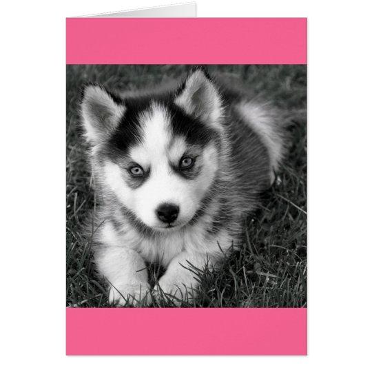 Siberian Husky Puppy Dog Blank Greeting Note Card