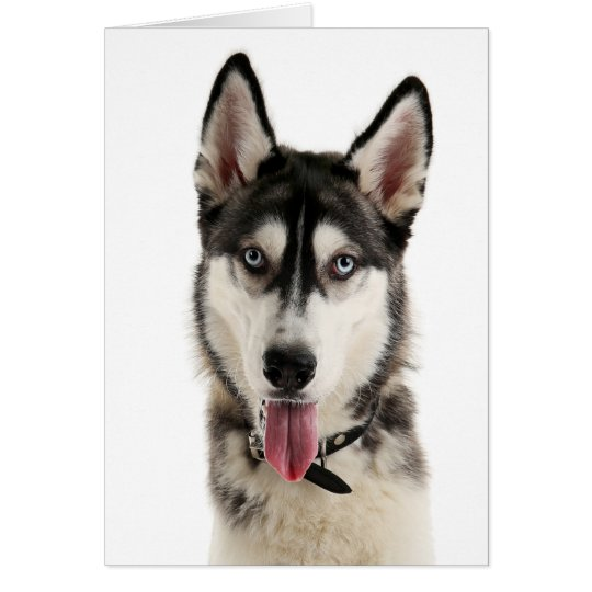 Siberian Husky Puppy Dog Hello Love Miss You,