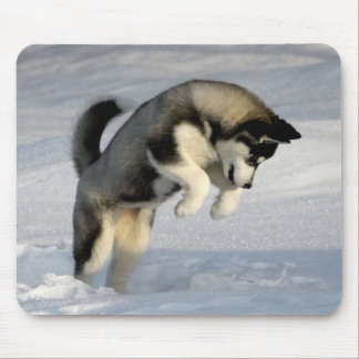 Siberian Husky puppy playing in the snow. Mouse Mat